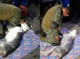 https://ungustito.mx/marino-intenta-salvar-vida-perrito-deslave-cerro-chiquihuite-130292/